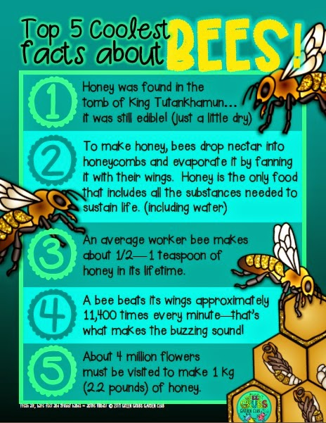 Top 5 coolest facts about… Honey Bees… Buuuzzzzzz!