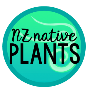 NZ Native Plants