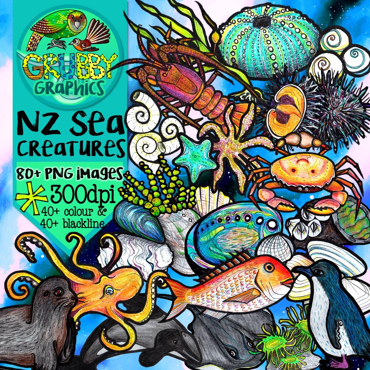 Shells A-Z - New Zealand Shells